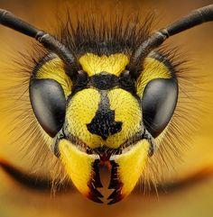 iG Colunistas – O Buteco da Net - » Fotógrafo eslovaco expõe fotos incríveis de insetos