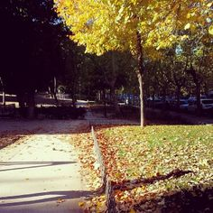 El #otoño ha llegado al Parque del Calero #Madrid #MadridMeMola #MadridMeMata #DeMadridAlCielo | Flickr: Intercambio de fotos