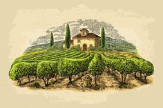 Rural Landscape with Villa and Vineyard Fields