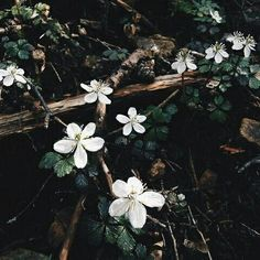 dark spring aesthetic discovered by Camila on We Heart It Pale Aesthetic, Spring Aesthetic, Nature Aesthetic, Flower Aesthetic, Elf Rogue, The Ancient Magus Bride, Slytherin Aesthetic, Artemis Aesthetic, All Nature