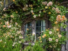 Nice to meet you. — © Bob Radlinski Nice to meet you. Cottage In The Woods, Cottage Style, Garden Cottage, Nice To Meet, Windows And Doors, The Secret Garden, Future House, Beautiful Places, Scenery