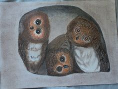 baby owls in their nest by 1bluwall on Etsy