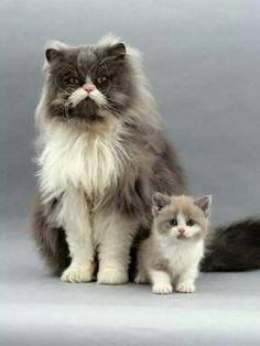 Pa en zoon