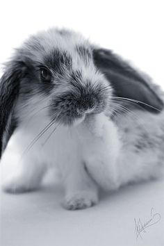 What can I say, I have a soft spot for bunnies :)