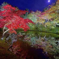 Instagram【akio_tanaka】さんの写真をピンしています。 《#京都 #高台寺 #臥龍池 #水鏡 #紅葉 #autumnleaves  #Alpha7S #Yakei_luv  #ptk_night  #japan_night_view  #noitenoinstagram #nightshooters #tv_illuminate  #夜景  #bestjapanpics_  #tokyocameraclub #igersjp #ig_japan #loves_nippon #team_jp #igs_world #colors_of_day #japan_of_insta #icu_japan #instagramjapan #jp_galley #wu_japan #bestjapanpics #japan_art_photograph #iglobal_photographers》