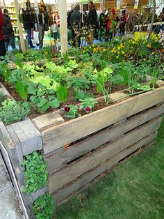 Raised kitchen garden bed made of pallets. I wonder if it's all-dirt filler? Seems excessive.