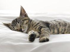 スヤスヤ眠る猫