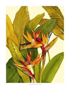 Tropical Bird of Paradise Art Print by Tim O'toole at Art.com