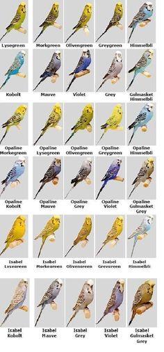 Birds #Birds