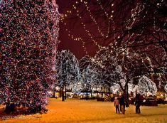 Christmas Lights, Rice Park, St. Paul, Minnesota - Minneapolis Photography Photo Blog