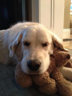 An awfully adorable picture of a dog with a stuffed toy dog. Pets are just so funny sometimes.