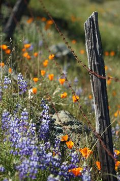 Wild flowers under barbed wire fence...