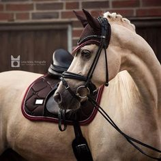 What do you think of the 'Deep Brown Bordeaux' set? ❤️ Tap the pic for the details 👆🏼 @lenamatufotografie @team.gb via @esstockholm Cute Horses, Pretty Horses, Horse Love, Beautiful Horse Pictures, Beautiful Horses, Beautiful Beautiful, Caballo Haflinger, English Horse Tack, Morgan Horse