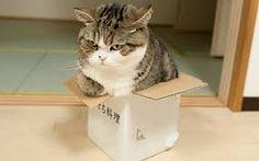 Картинки по запросу кот в коробке