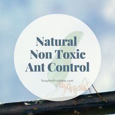 how to get rid of house ants with natural remedies