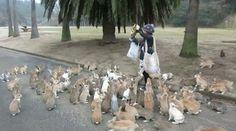 Bunny Island, Rabbit Island, Wild Bunny, Funny Animals, Cute Animals, Rabbit Gif, Girl Gifs, Sea Creatures, Dolores Park