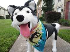 TAMR Bandanas! $5. 100% proceeds goes back to rescue. Contact tamr@texalmal.org for info on how to get your furkid a bandana!