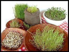 Cozinha Natureba: Comida viva - life food