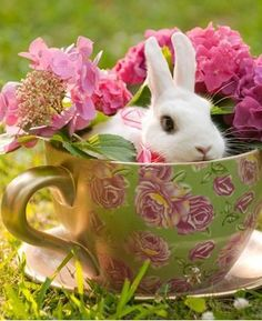 DIY Diamond Painting Kits Special Rabbit in the Flower Cup Alice In Wonderland Wedding, White Rabbits, Hoppy Easter, Perfect World, Cross Stitch Kits, Pink And Green, Bright Pink, Pretty In Pink, Cute Dogs