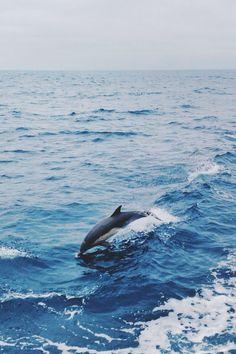 Leaping Dolphin at Santa Barbara Island Ocean Creatures, Cute Creatures, Beautiful Creatures, The Ocean, Ocean Life, Amazing Animals, Animals Beautiful, Orcas, Wildlife Photography
