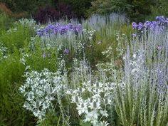 rabatt lavendel Eringium, Russian sage and Phlox // Wisley (Royal Horticultural Society gardens, UK) Garden Planning, Landscape Design, Palette Garden, Prairie Garden, Cottage Garden, Perennials, Plants, Purple Garden, Garden Inspiration