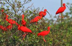 Mais Turismo: Conheça a Floresta dos Guarás
