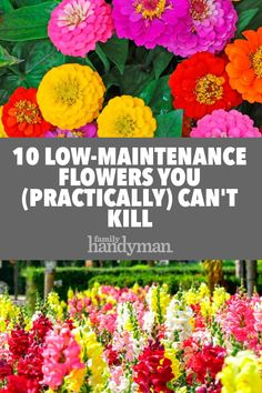 10 Low-Maintenance Flowers You (Practically) Can't Kill Whether you're new to gardening or just looking to keep things stress free, these resilient flowers will liven up your landscape without causing you to constantly fuss around with them. Garden Yard Ideas, Lawn And Garden, Garden Projects, Garden Loppers, Garden Crafts, Mailbox Garden, Garden Boots, Backyard Ideas, Full Sun Garden