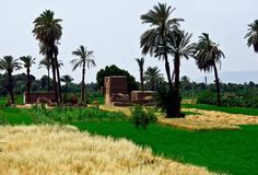 Countryside, Egypt
