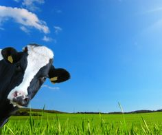 Immagine: California adotta regole severe su Antibiotici Farm Link File: https://it.fotolia.com/id/91961532