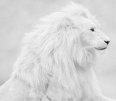 26 Unusual Albino Animals in Pictures