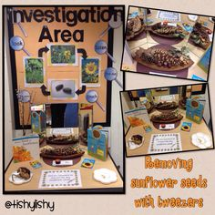 Sunflower seed removal on the investigation table