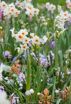 Daffodil Cragford