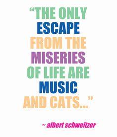 Albert Schweitzer cat quote #catquote #albertschweitzer