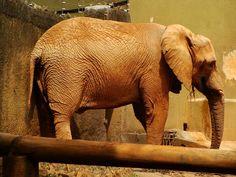 Elefante - Zoológico de São Paulo - photo by Renato Aguiar