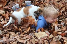 Kooikerhondje puppy is playing in the leaves with her best friend / baby boy! <3