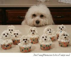 Cup cakes ... Dog style