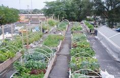 Rooftop Farming in Milwaukee