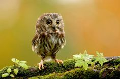 Baby Animals: Cute Baby Owl