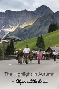 Every year on September he Alpabtrieb/Viehscheid - Alpine cattle drive takes place in Kleinwalsertal. Cattle Drive, Cultural Events, September, Survival, Culture, Activities, Mountains, Places, Travel
