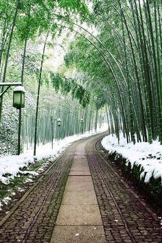 Bamboo path, Japan | PicadoTur - Consultoria em Viagens | Agencia de viagem | picadotur@gmail.com | (13) 98153-4577 | Temos whatsapp, facebook, skype, twiter.. e mais! Siga nos|