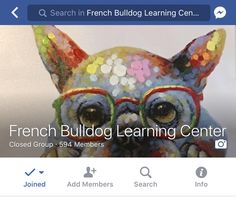 Our French Bulldog Learning Center Group On Facebook. Come Join Us!  Follow us on Instagram @fabulouslifeoffrenchies