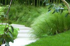 Zartes Federgras • Stipa tenuissima • Engelhaar • Frauenhaargras • Pflanzen…