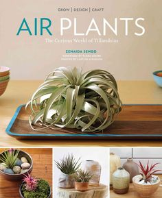 Air Plants , by Zenaida Sengo, the interior coordinator at the popular San Francisco-based Flora Grubb Gardens, shows how simple and rewarding it is to grow, craft, and design with these modern beauti                                                                                                                                                     More