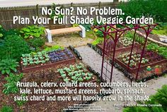 Shade vegetables: Arugula, celery, collard greens, cucumbers, herbs, lettuce, mustard greens, rhubarb, spinach, swiss chard, etc.