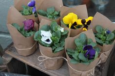 A group of Pansy plants wrapped individually in brown paper with string