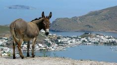 This Donkey is enjoying a spectacular view of Skala, the port town on Patmos island, from the top of a hill at the edge of Chora, Patmos, Greece.  Patmos Island is the place where St John wrote Revelation. The cave can be visited.