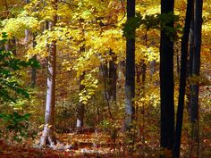 Image result for ontario forests