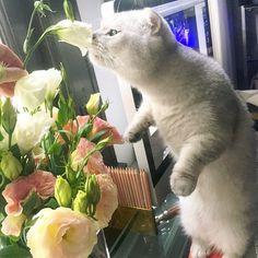 Flowers, cat