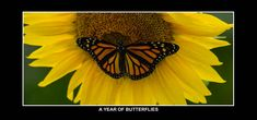 Check out this project - A Year of Butterflies - from CreatePhotoCalendars.com! Butterfly Garden Plants, Photo Calendar, Create Photo, Monarch Butterfly, Nature Photos, Butterflies, Check, Prints, Photography