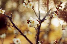 Inspiring photography by Mayu | The D-Photo